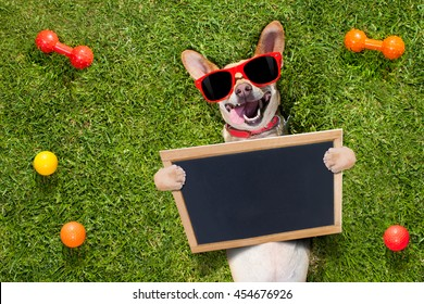 happy chihuahua terrier dog  in park or meadow waiting and looking up to owner to play and have fun together, holding a banner or placard