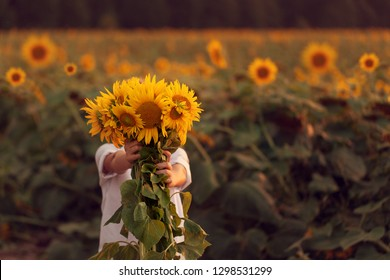 dac3754474 Happy child with bouquet of beautiful sunflowers in summer sunflower field  on sunset. Mother day