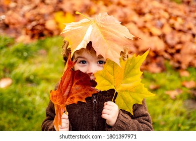 Happy child boy with a bright red yellow autumn leaf in the park - Shutterstock ID 1801397971