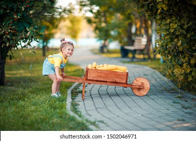 Happy child with yellow corn cobs in the wheelbarrow. Beautiful baby girl with corn cobs. Happy child. Autumn crop in the wooden wheelbarrow.
