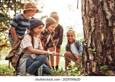 Happy children boys and girls in casual clothes with backpackslooking examining tree bark while exploring forest nature and environment on sunny day during outdoor ecology school lesson together