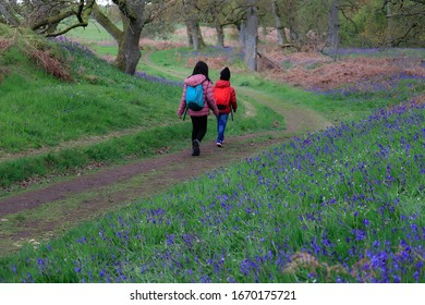 Happy children enjoying walking in bluebell wood. This photo was taken in early May at a bluebell wood in Scotland.  Bluebell blossoms last only for two-three weeks, between April and May.