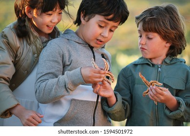 Happy children looking at starfish learning with curiosity at the beach