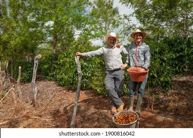 Happy coffee picker men on a coffee farm.
