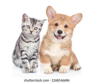 Happy corgi puppy with open mouth and sad tabby kitten together. isolated on white background