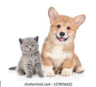 Happy corgi puppy with open mouth and tiny kitten together. isolated on white background