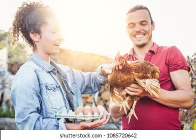 Happy couple of agricultrist picking up fresh eggs in henhouse farm at sunset - Young farmers working in the factory house - Concept of people grower breeding production, vegeterian and agriculture