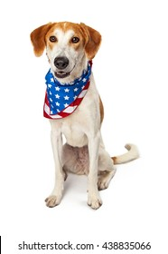 Happy crossbreed dog wearing American flag bandana sitting on white looking forward