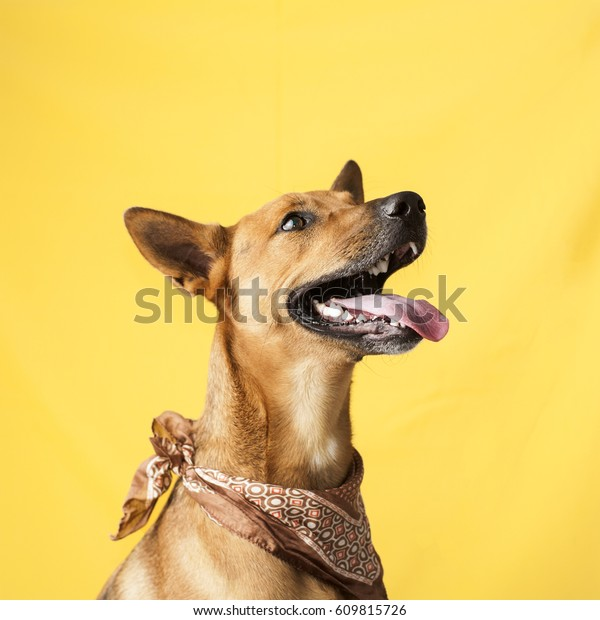 Happy, curious dog Mixed breed, isolated on a colorful background