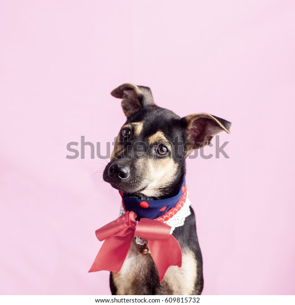 Happy, curious dog Mixed breed, puppy isolated on a pink background