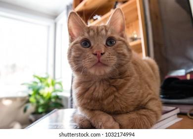 happy cute cat