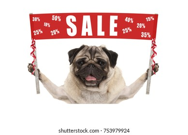 happy cute pug puppy dog holding up red promotional  banner sign with text sale % off, isolated on white background