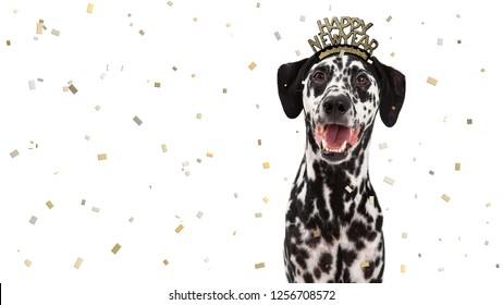 Happy dalmatian dog having fun celebrating New Year's Eve. Room for text in white space with falling confetti