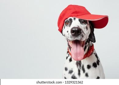 Dog in Baseball Cap Images, Stock Photos & Vectors