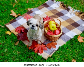 happy dog with a basket of fruit  outdoor in the autumn park