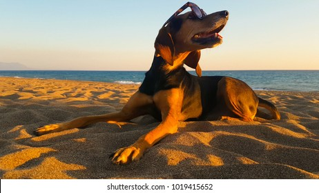Happy dog at the beach wearing sunglasses. A cute moment.