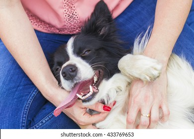 Happy Dog, Border Collie with her owner