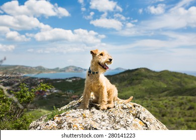 Happy dog breed lakeland terrier is sitting on a large rock on a background of mountains, sea and blue sky