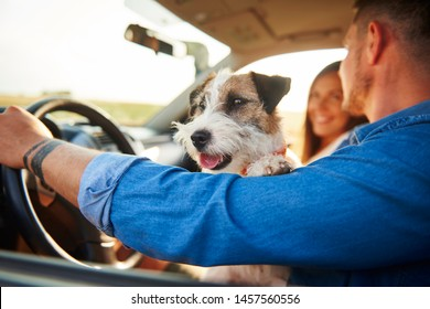 Happy dog in car during road trip