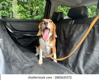 Happy Hund im Auto mit Leine auf, Autoabdeckung für Tiere