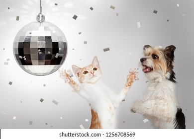 Happy dog and cat dancing at New Yearr's Eve party with disco ball and falling confetti
