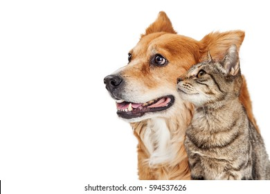 Happy dog and cat together looking to side - Closeup over white with copy space