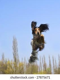 Happy dog caught in flight