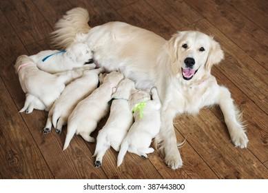 Happy dog feeding her puppies