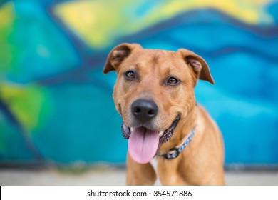 Happy dog in front of a bright blue graffiti wall