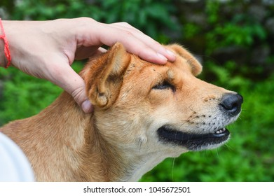 A happy dog getting a head massage from his owner while they sunbathe in the summer sun