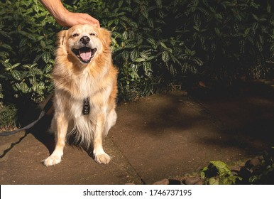 Happy dog getting pet while sitting on a park. Green leaves on the background, morning light. Copy space, ad background.