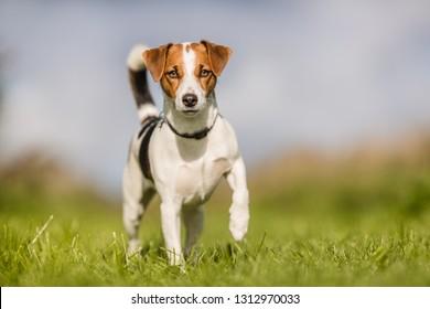 happy dog at grass