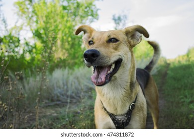 happy dog ??on the grass background