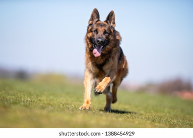 happy dog has a great time