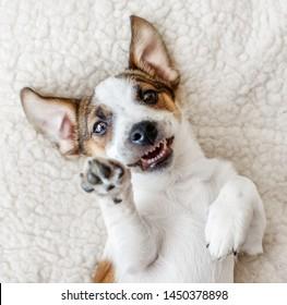 Happy dog at home. Dog smiling