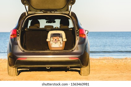 Happy dog inside pet carrier in car trunk at sea beach