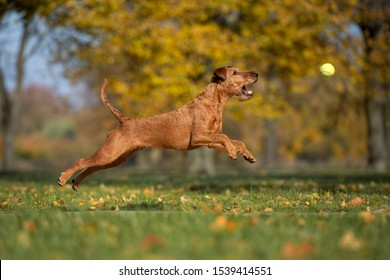 happy dog jumping up to catch a ball outdoors