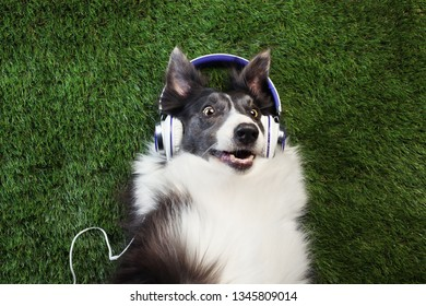 Happy dog laying in the grass listening to music