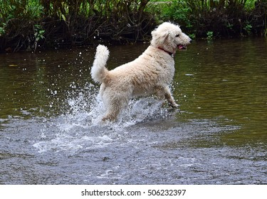 Happy Dog Leap Jump in River Water