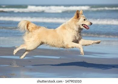 Happy dog leaping on the beach