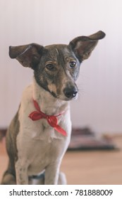 happy dog is looking for direction on blur background - vintage matte look