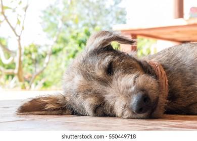 Happy dog Lying on the ground