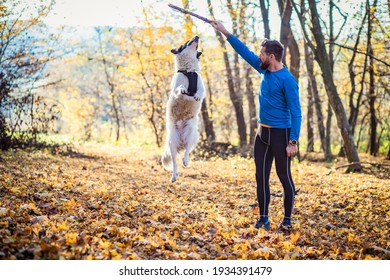 happy dog and man playing in autumn forest