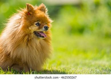 Happy dog in meadow
