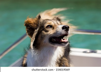 Happy dog on a boat in the summertime