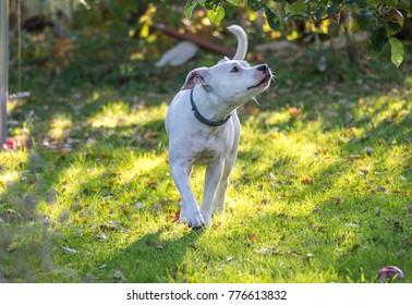 Happy dog on a walk in the sunshine