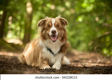 Happy dog photographed outside in the forest