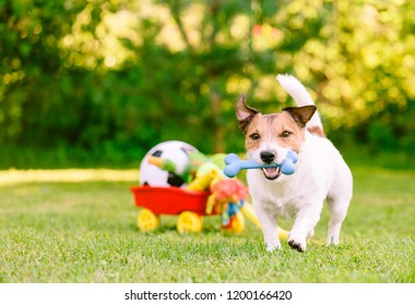 Happy dog playing outdoor walking with rubber bone next to cart full of doggy toys and balls
