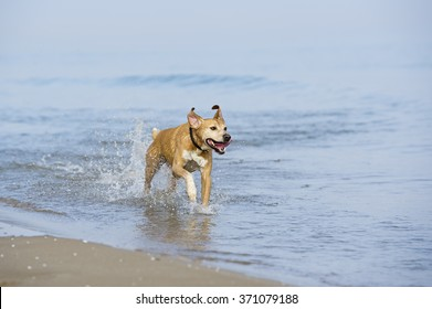 Happy dog plays at the beach