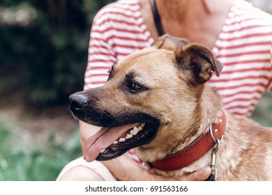 Happy dog portrait, woman hugging cute mongrel dog outdoors, big eyed puppy posing with tongue out, animal adoption concept